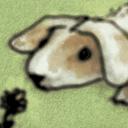 Kanin maskros